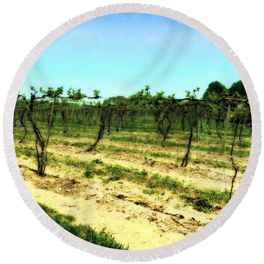 Grape Vines Round Beach Towel featuring the photograph Spring Vineyard Ll by Michelle Calkins