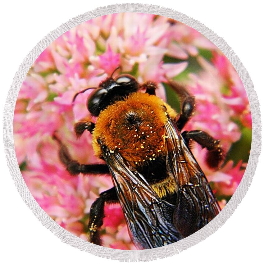 Bumblebee Round Beach Towel featuring the photograph Sprinkled With Pollen by Chris Berry