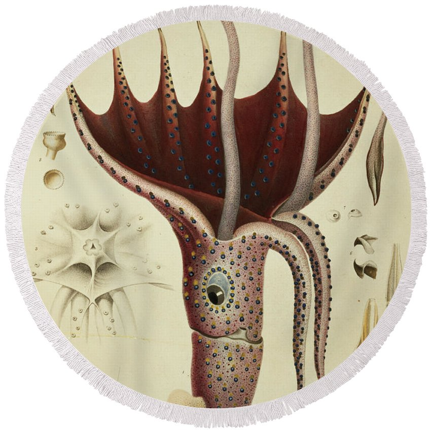 Cranchia Round Beach Towel featuring the painting Squid by A Chazal