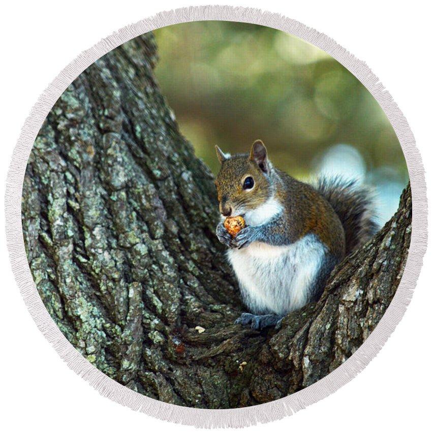 Squirrel Round Beach Towel featuring the photograph Squirrel In A Tree by Linda Kerkau