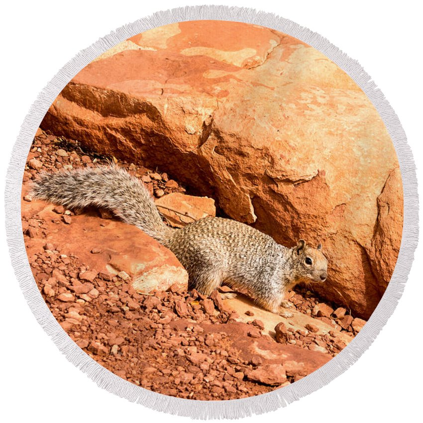 Grand Canyon Round Beach Towel featuring the photograph Squirrel by Jamie Heeke