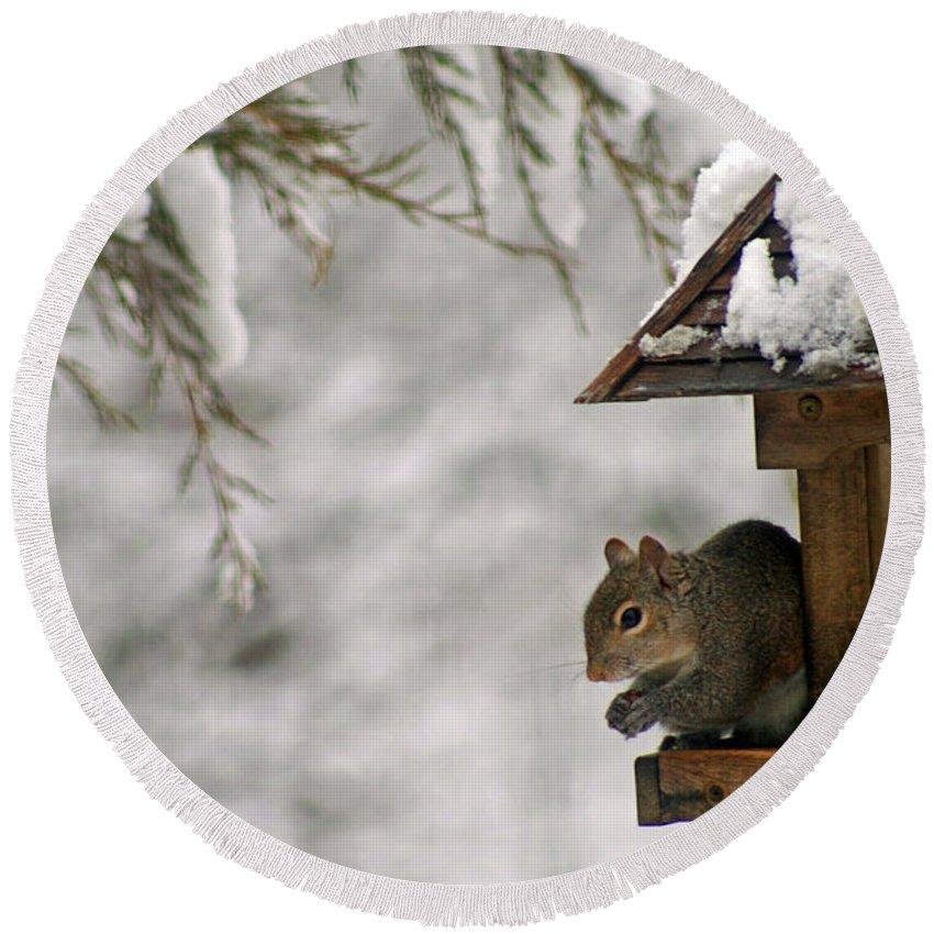 Squirrel Round Beach Towel featuring the photograph Squirrel On The Bird Feeder by Karen Adams