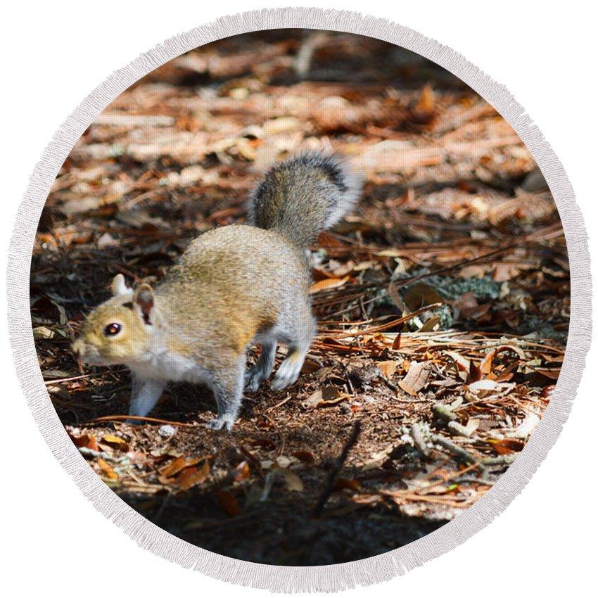 Squirrel Round Beach Towel featuring the photograph Squirrel Time by Linda Kerkau