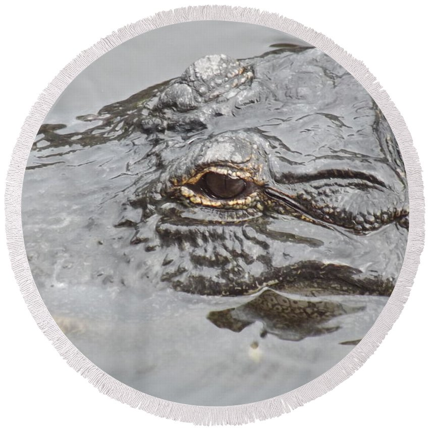 Alligator Round Beach Towel featuring the photograph Stalker 2 by Jennifer Lavigne