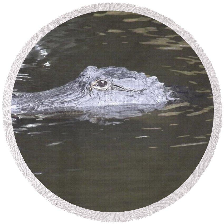 Alligator Round Beach Towel featuring the photograph Stalker by Jennifer Lavigne