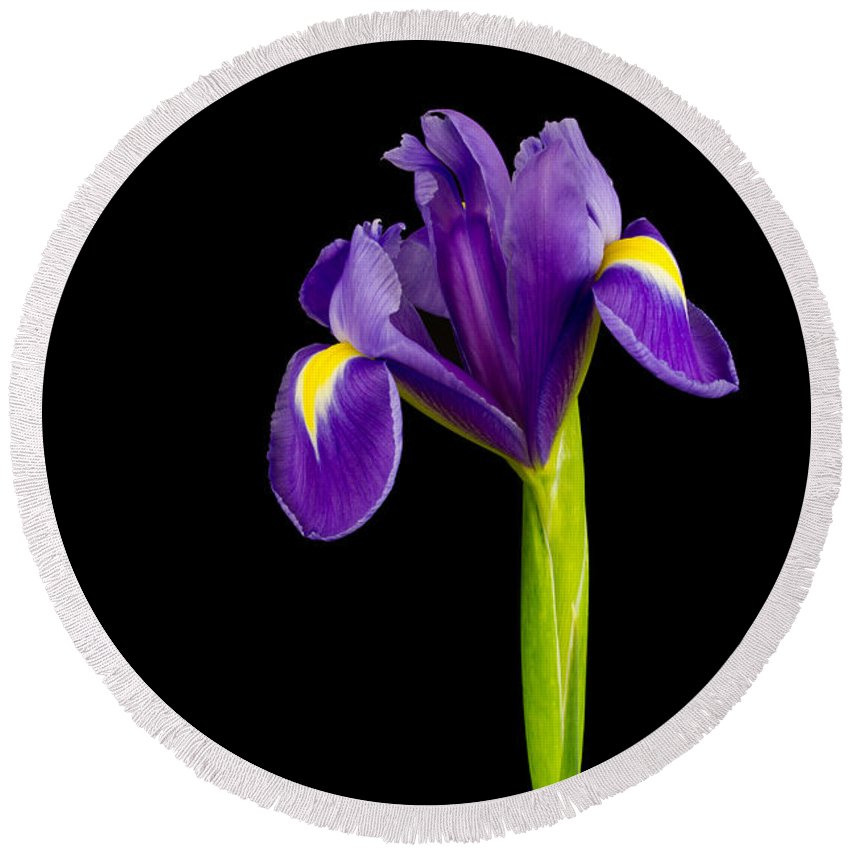Black Background Round Beach Towel featuring the photograph Standing Iris by David Head