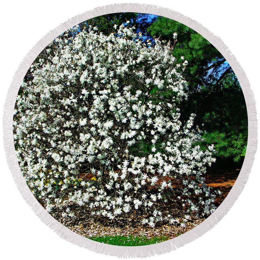 Star Magnolia Round Beach Towel featuring the photograph Star Magnolia by Gary Richards