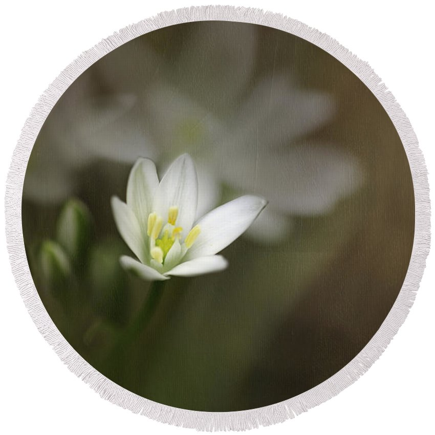 Flower Round Beach Towel featuring the photograph Star Of Bethlehem by Fran Gallogly
