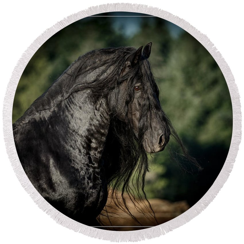 Star Stallion Round Beach Towel featuring the photograph Star Stallion by Wes and Dotty Weber