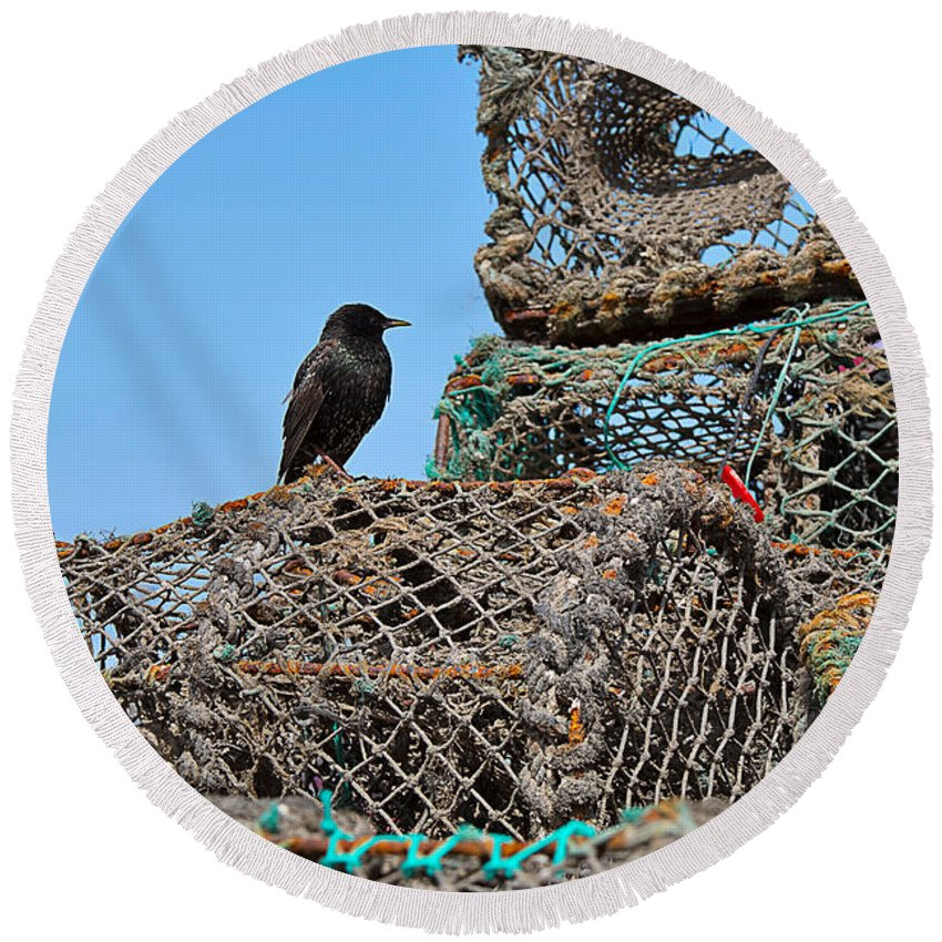 Starling Round Beach Towel featuring the photograph Starling On Lobster Pots by Louise Heusinkveld