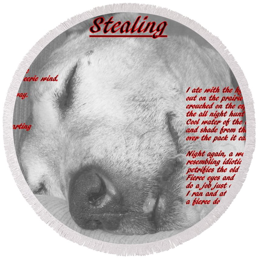 Dog Round Beach Towel featuring the photograph Stealing by Guy Pettingell