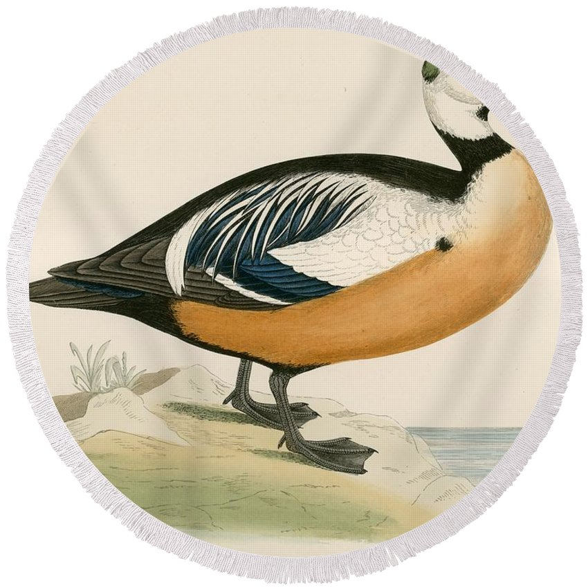 Birds Round Beach Towel featuring the photograph Stellers Western Duck by Beverley R. Morris