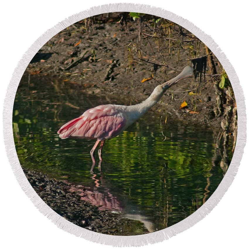 Spoonbill Round Beach Towel featuring the photograph Stretched Out Pink Spoonbill by Stephen Whalen