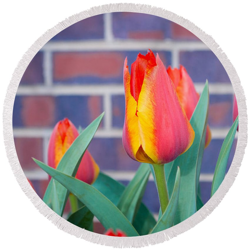 Flowers Round Beach Towel featuring the photograph Striped Tulips by Debra Powell