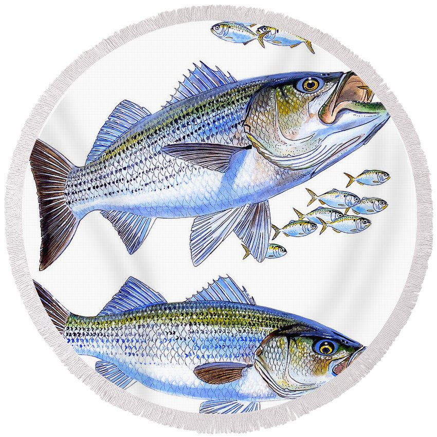 Striped Bass Round Beach Towel featuring the painting Stripers by Carey Chen
