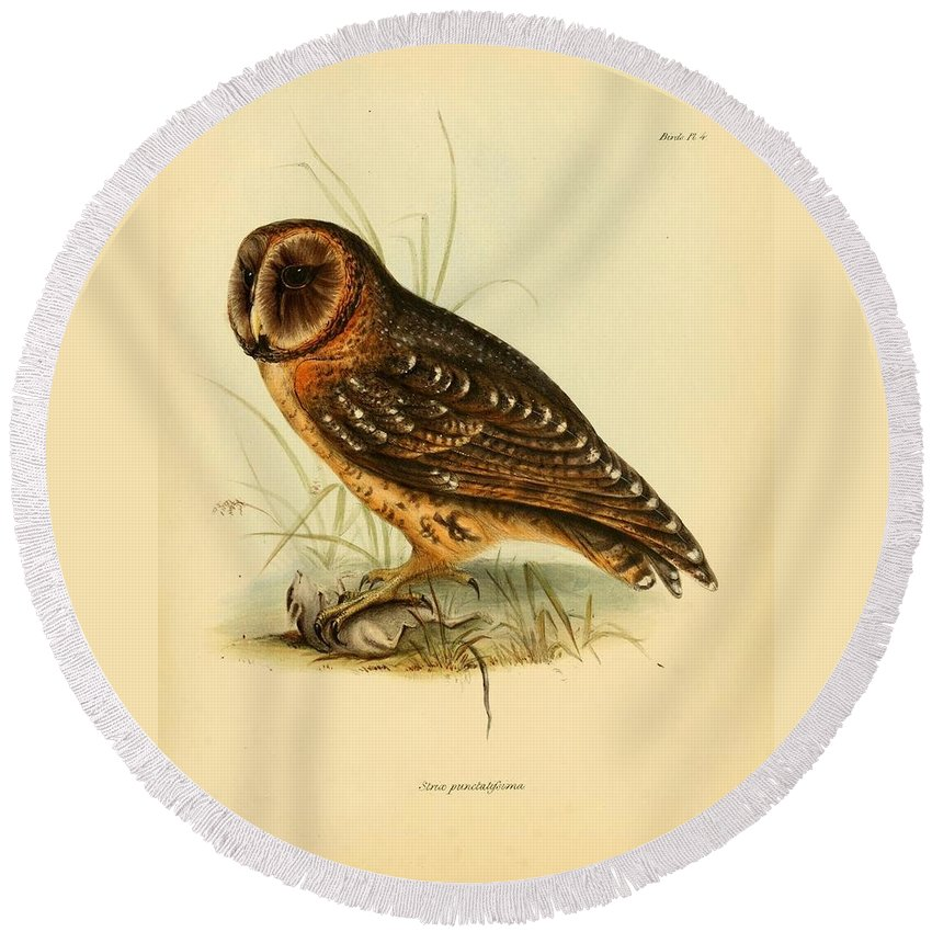 Audubon Round Beach Towel featuring the painting Strix Owl by Philip Ralley