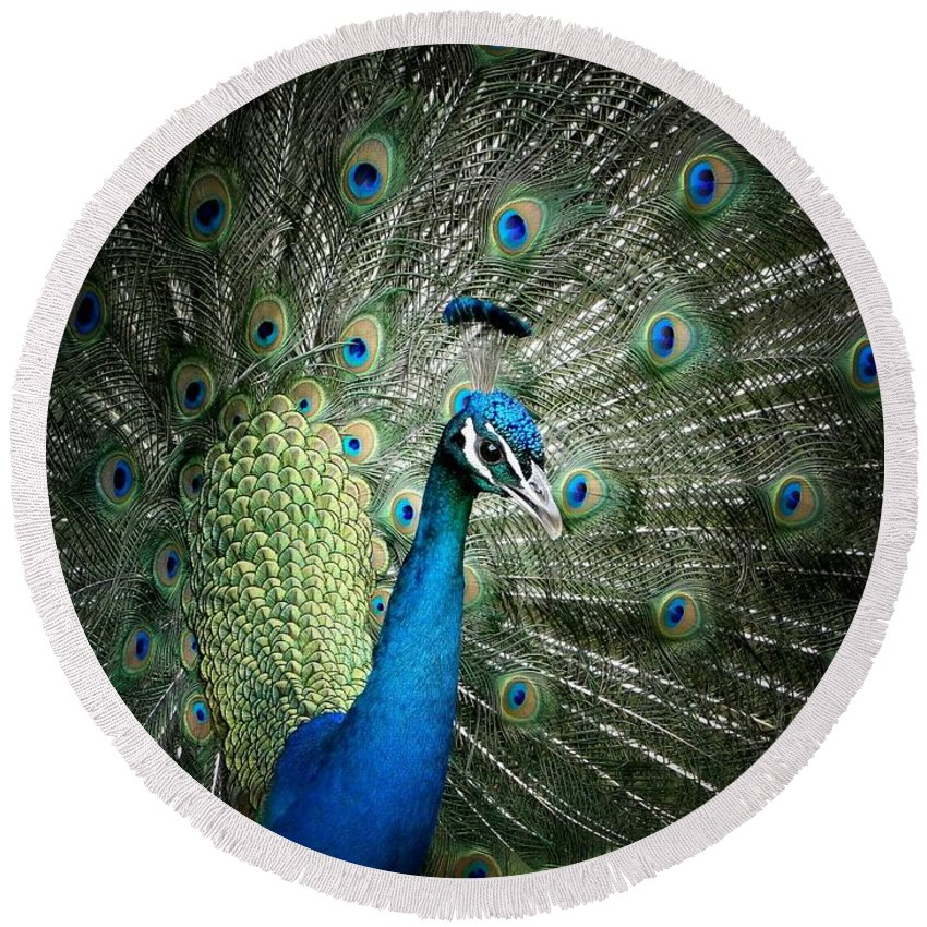Peacock Round Beach Towel featuring the photograph Stunning 1 by Ben Yassa
