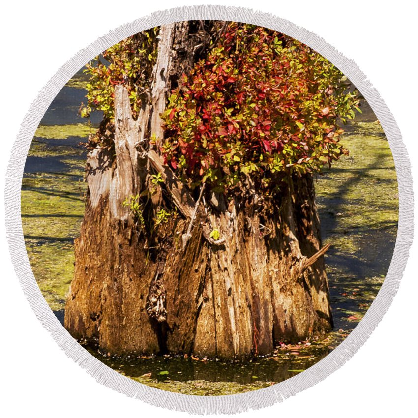Black Bayou Lake National Wildlife Refuge Monroe Louisiana Park Parks Submerged Tree Trunk Trees Trunks Nature Round Beach Towel featuring the photograph Submerged by Bob Phillips