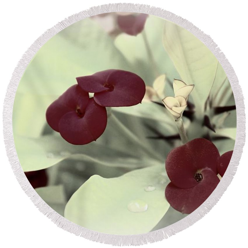 Flower Round Beach Towel featuring the photograph Subtle Beauty by Clare Bevan