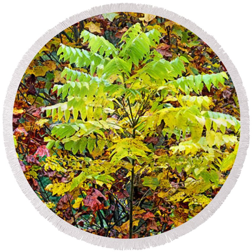 Duane Mccullough Round Beach Towel featuring the photograph Sumac Leaves In The Fall by Duane McCullough