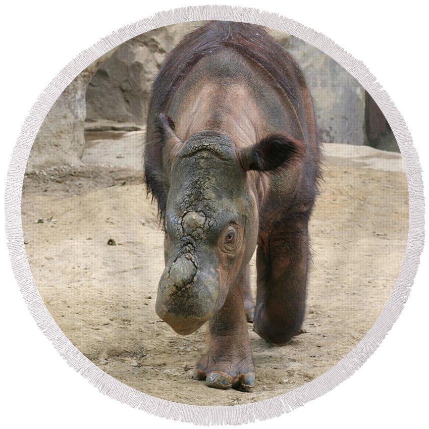Sumatran Rhinoceros Round Beach Towel featuring the photograph Sumatran Rhinoceros by Judy Whitton