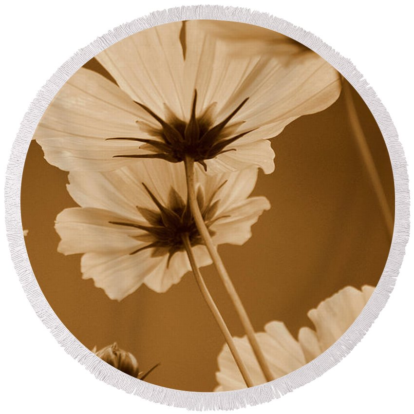 Sepia Round Beach Towel featuring the photograph Summer Evening Cosmos by Kathy Sampson