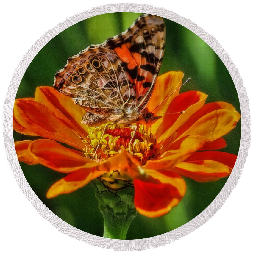 Red Admiral Butterfly Round Beach Towel featuring the photograph Summers Last Butterfly by Elizabeth Winter