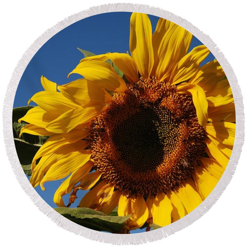 Sunflower Round Beach Towel featuring the photograph Sun Blessed by Eric Tressler