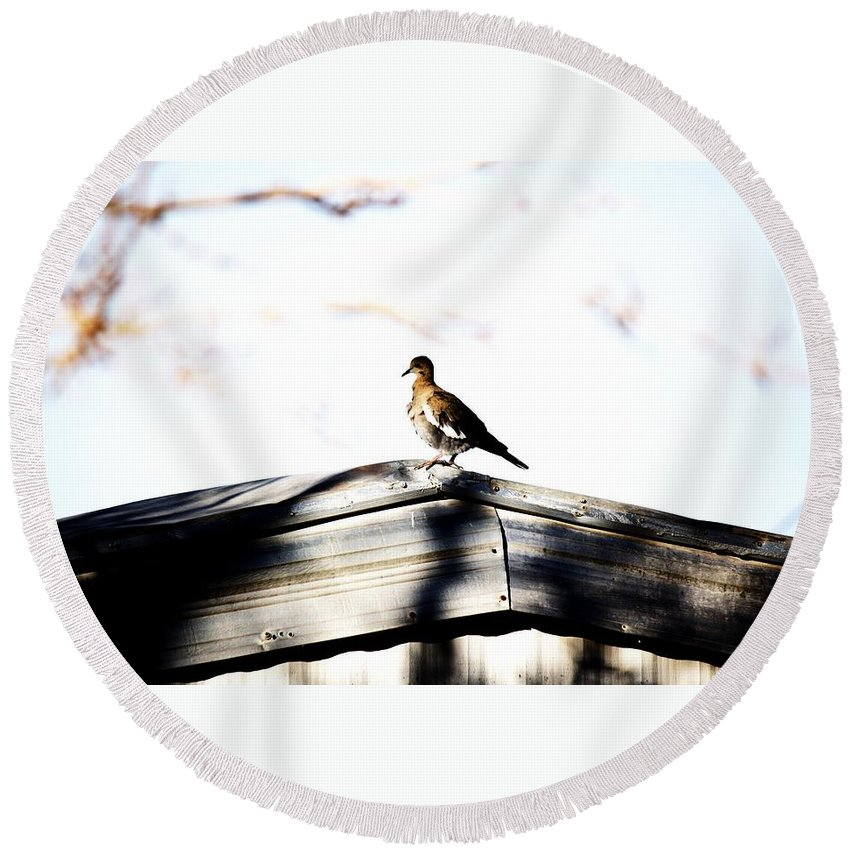 Birds Round Beach Towel featuring the photograph Sunday Morning by Jessica Shelton