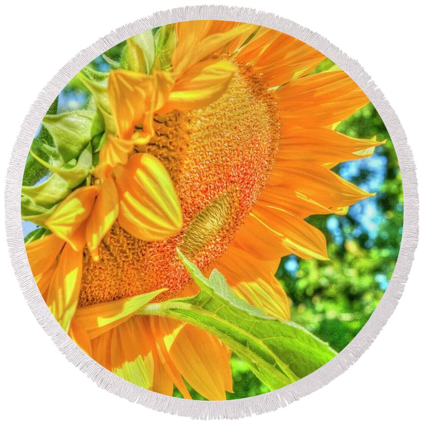 Beautiful Bc Round Beach Towel featuring the photograph Sunflower 2 by Rod Wiens