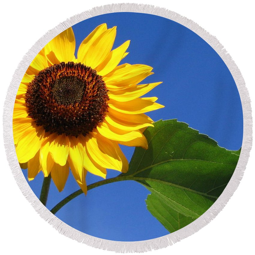 Sunflower Round Beach Towel featuring the photograph Sunflower Alone by Line Gagne