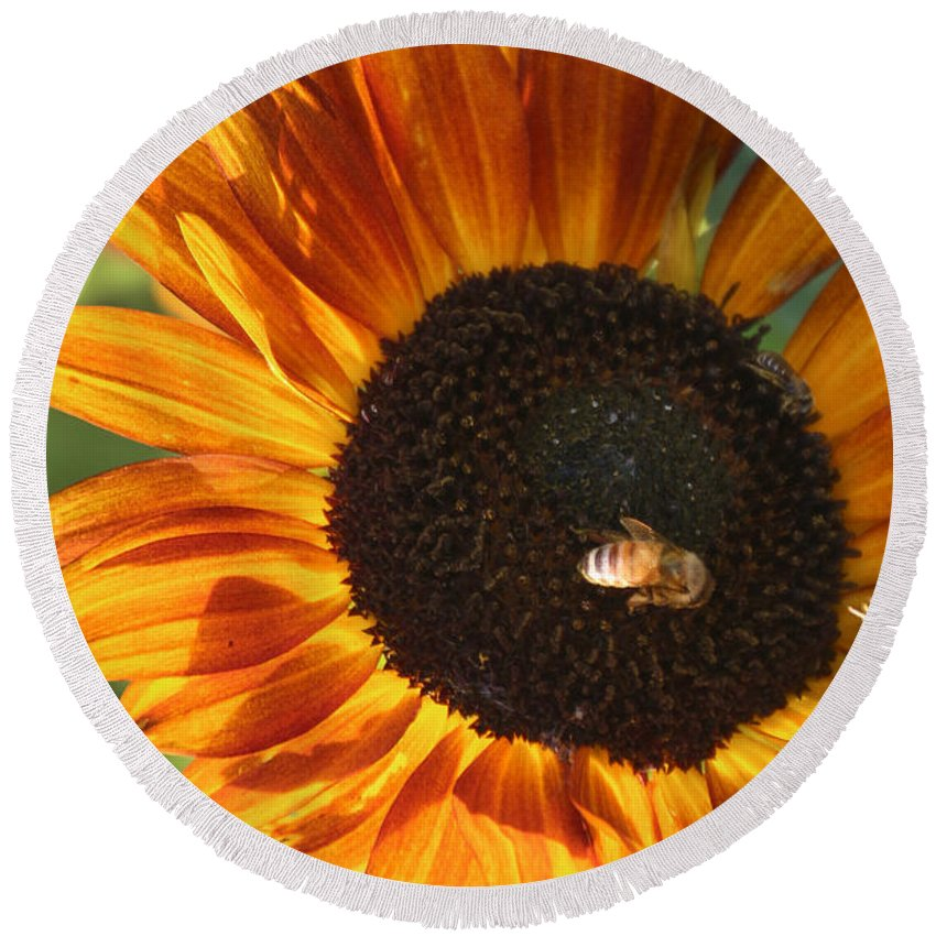 Sunflower Round Beach Towel featuring the photograph Sunflower And Bee-4041 by Gary Gingrich Galleries