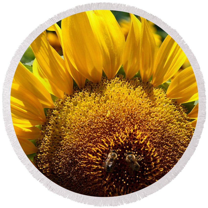 Sunflower Round Beach Towel featuring the photograph Sunflower And Two Bees by Christiane Schulze Art And Photography