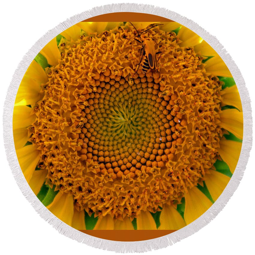 Abstract Round Beach Towel featuring the photograph Sunflower Close-up by Karen Adams