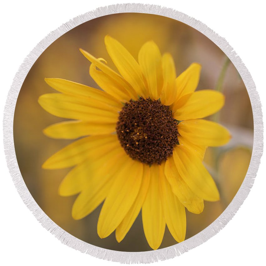 Sunflower Round Beach Towel featuring the photograph Sunflower Closeup by Vishwanath Bhat