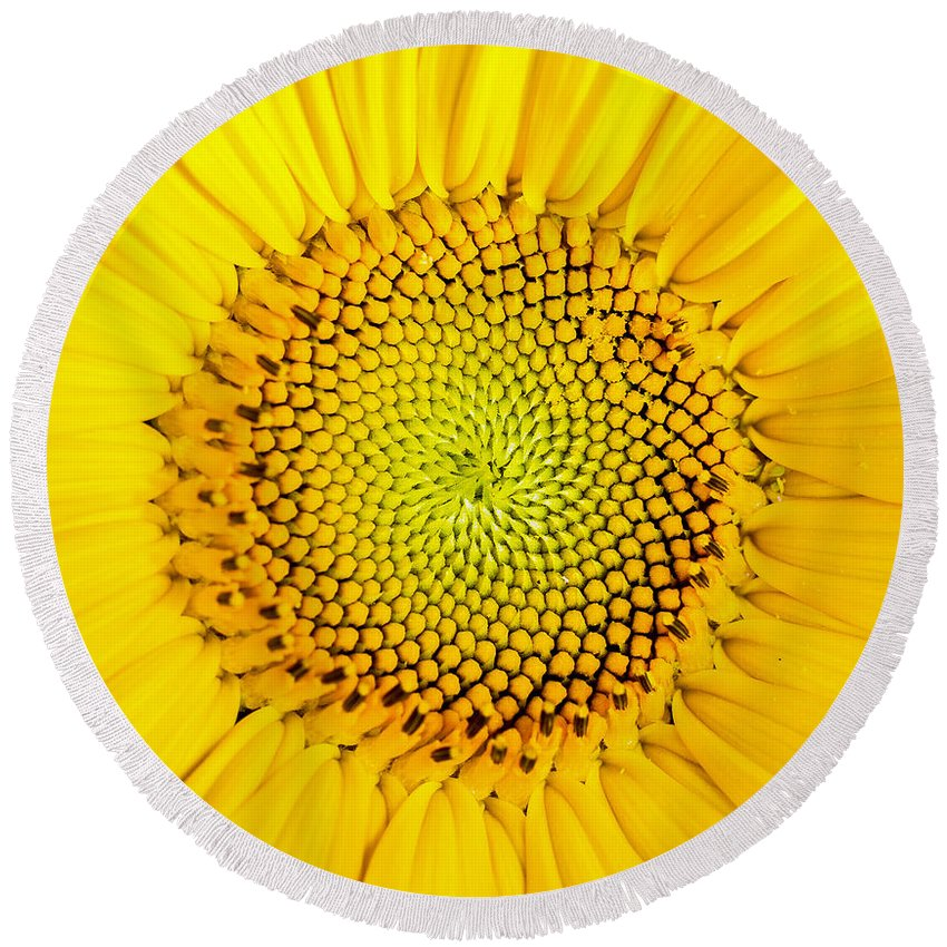 Sunflower Seeds Round Beach Towels