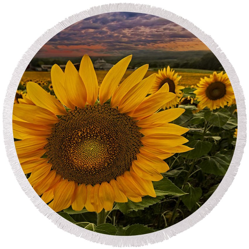 Sunflower Round Beach Towel featuring the photograph Sunflower Field Forever by Susan Candelario