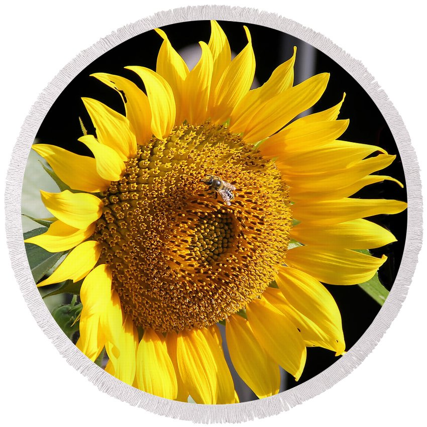 Jean Plout Round Beach Towel featuring the photograph Sunflower-jp2437 by Jean Plout