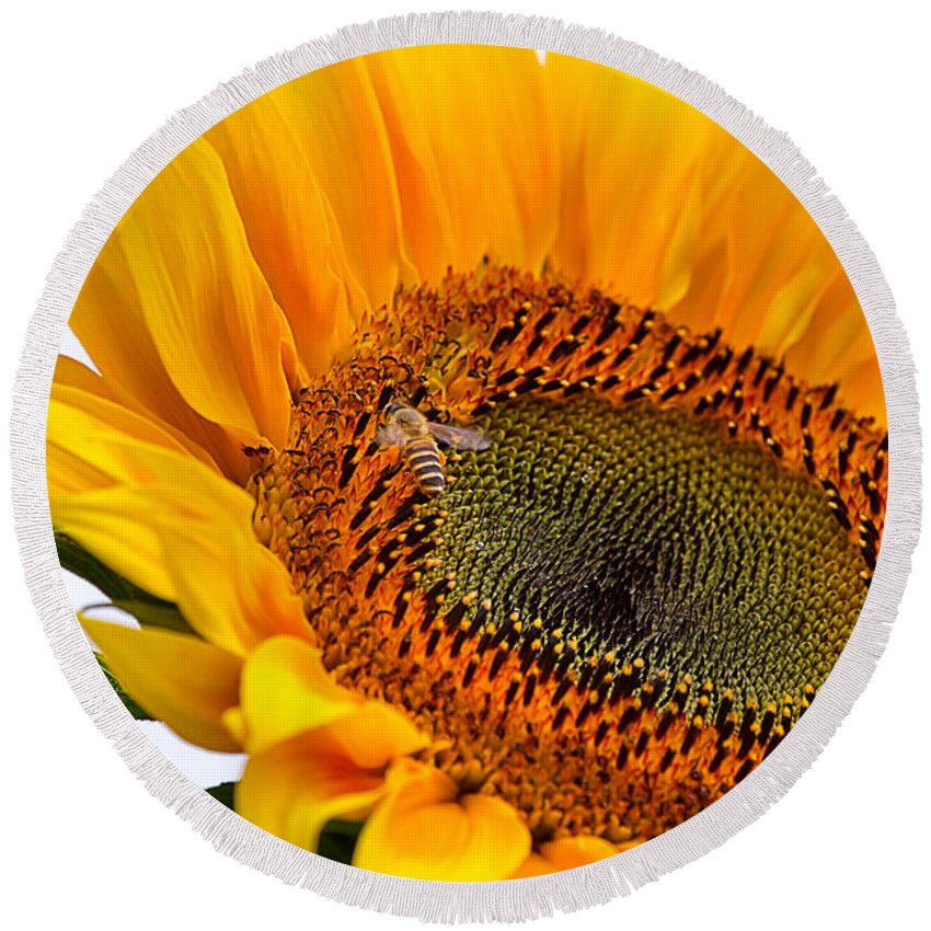 Nature Round Beach Towel featuring the photograph Sunflower by Louise Heusinkveld