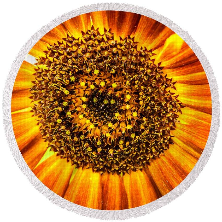 Sunflower Round Beach Towel featuring the photograph Sunflower Macro by Grace Grogan
