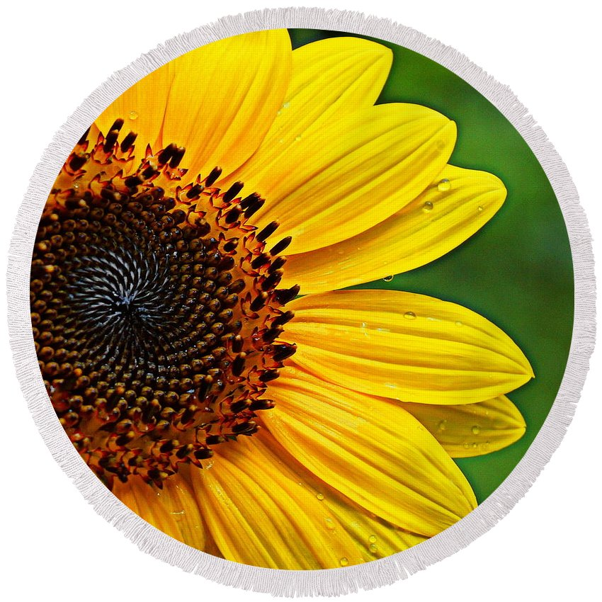 Sunflower Round Beach Towel featuring the photograph Sunflower Macro by Paul Wilford