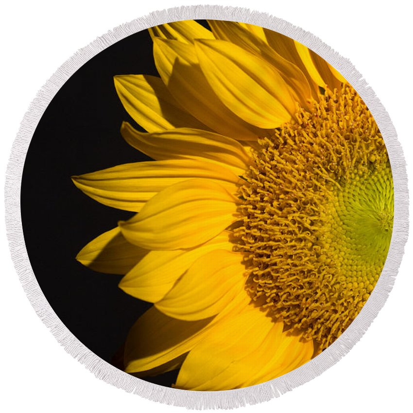Sunflowers Round Beach Towel featuring the photograph Sunflower by Mark Ashkenazi