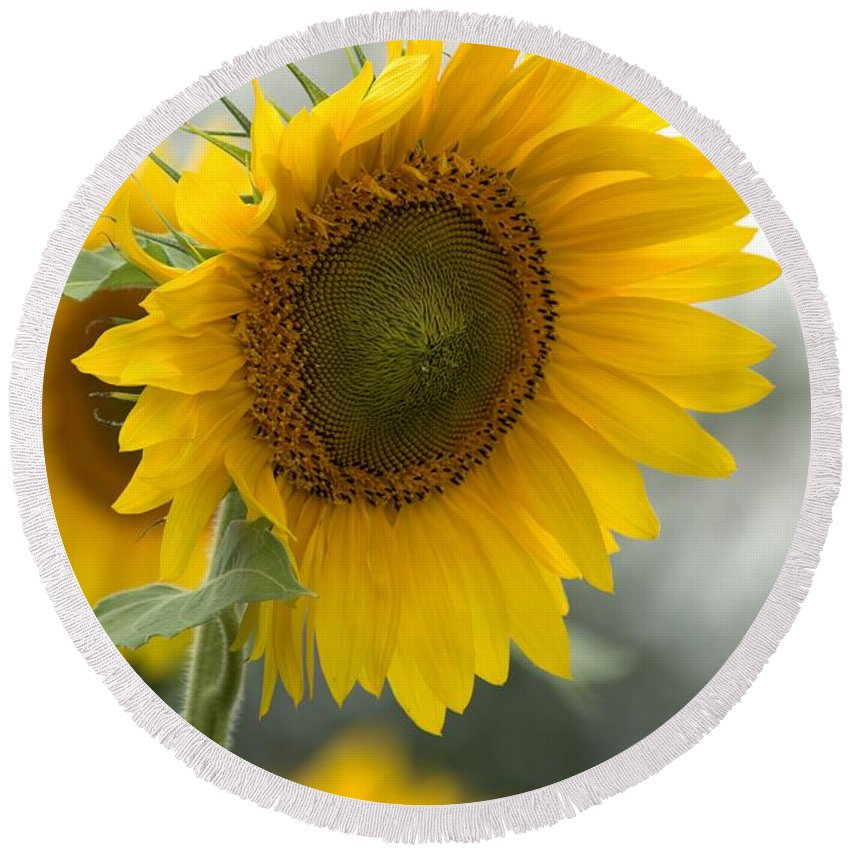 Flower Round Beach Towel featuring the photograph Sunflower Portrait by Bonfire Photography