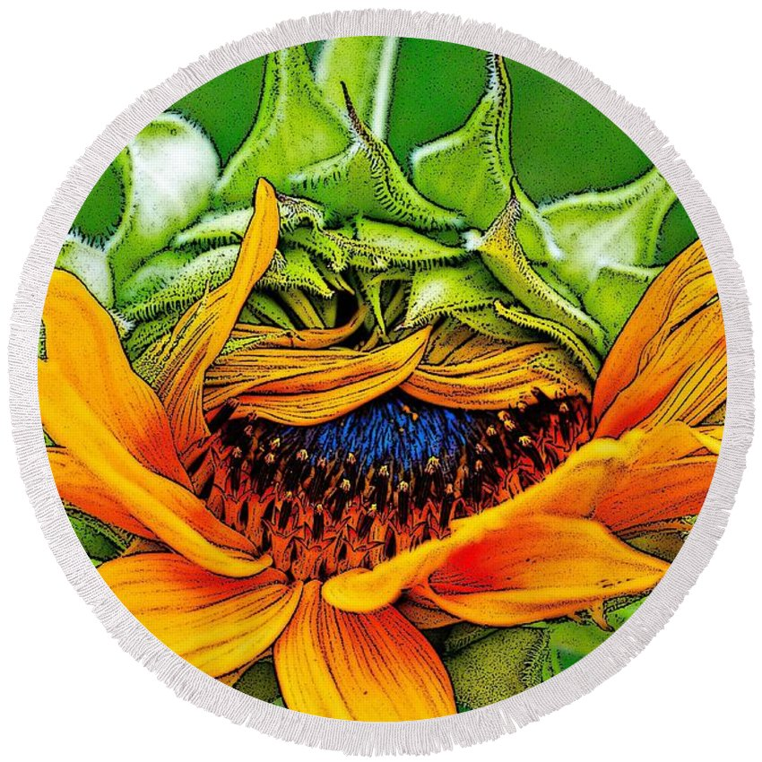 Sunflower Round Beach Towel featuring the photograph Sunflower Volunteer Half Bloom by Gwyn Newcombe