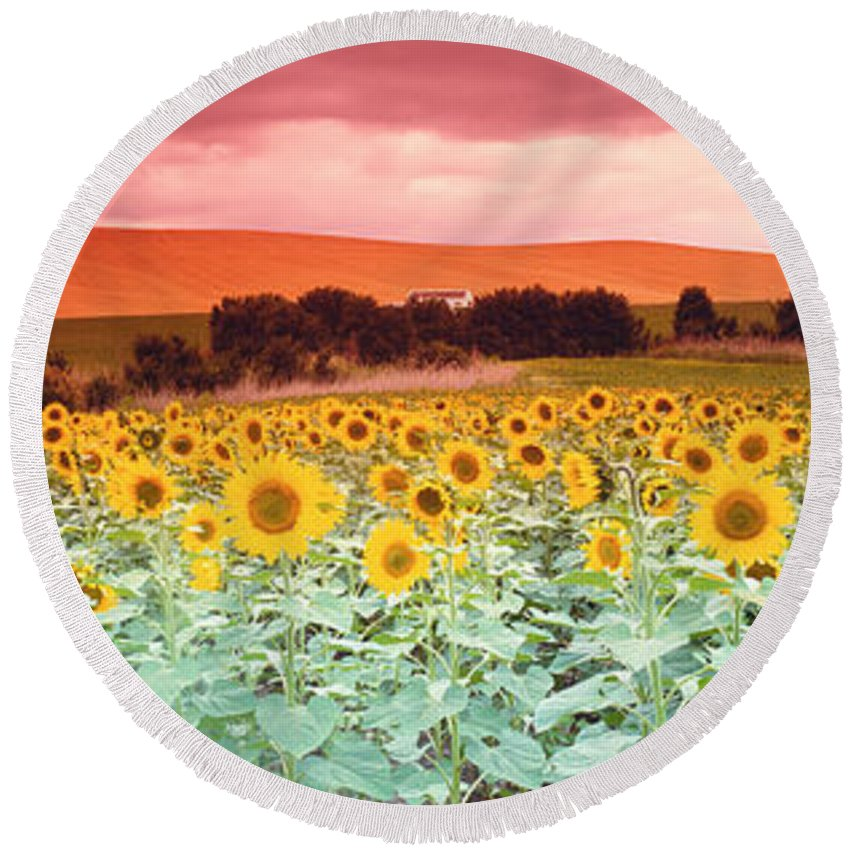 Photography Round Beach Towel featuring the photograph Sunflowers, Corbada, Spain by Panoramic Images