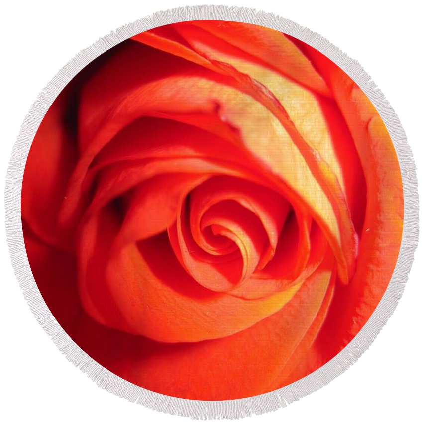 Floral Round Beach Towel featuring the photograph Sunkissed Orange Rose 11 by Tara Shalton
