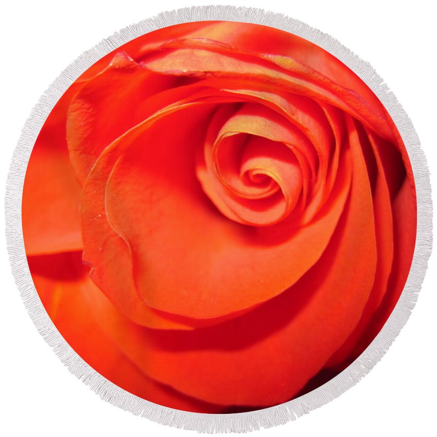 Floral Round Beach Towel featuring the photograph Sunkissed Orange Rose 9 by Tara Shalton