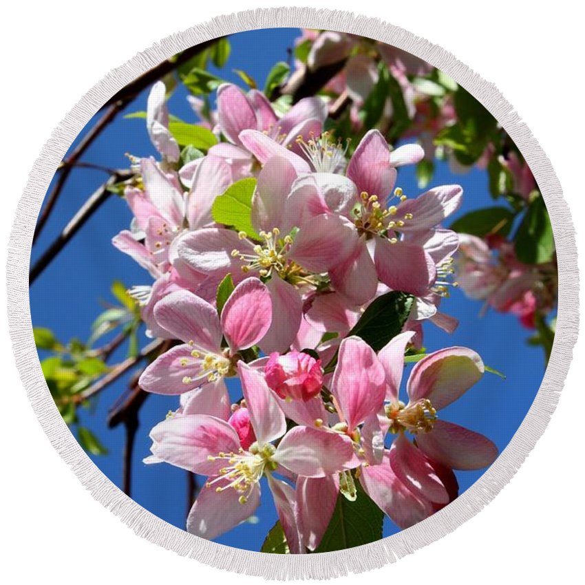 Blossoms Round Beach Towel featuring the photograph Sunlight On Spring Blossoms by Carol Groenen