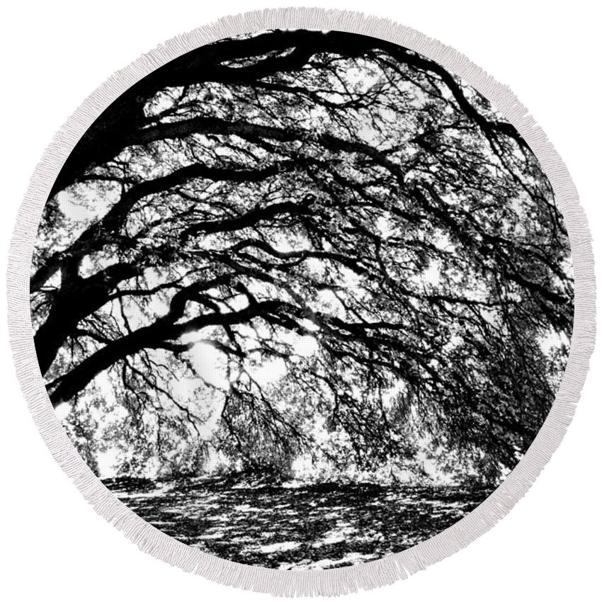 Tree Round Beach Towel featuring the photograph Sunlight Through Spanish Oak Tree - Black And White by Carol Groenen
