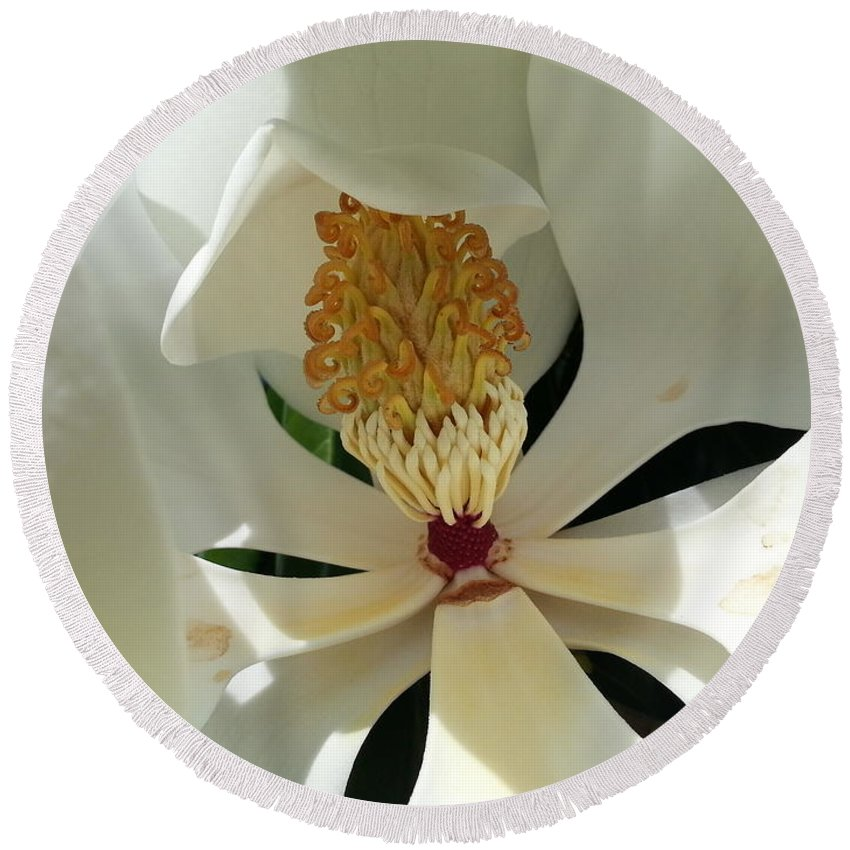 Magnolia Round Beach Towel featuring the photograph Sunny And Shy Magnolia by Caryl J Bohn